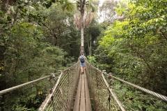 Le parcours en hauteur du zoo de Guyane